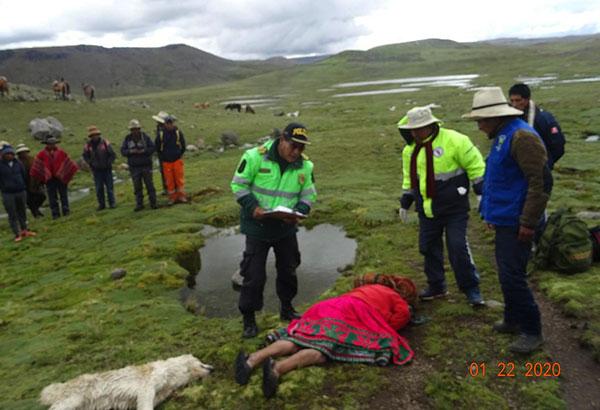 Antabamba: Rayo mata a campesina que pastoreaba su animales.