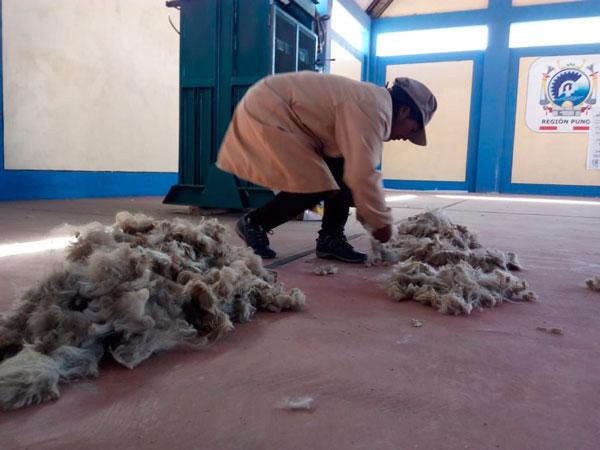 Puno: mujeres productoras de fibra de alpaca obtendrán certificación