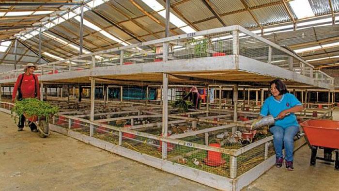 Agro Rural invertirá más de S/ 79 millones para potenciar desarrollo ganadero en 8 regiones