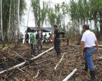 Defensoría insta al Estado a tomar acciones efectivas contra la tala ilegal