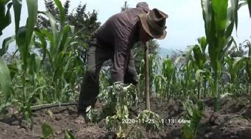 Gobierno Regional de Apurímac solicitó a la PCM e Indeci declarar en emergencia sector agrícola por sequía