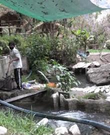 Desconocidos tiran veneno a río Puruchaca causando la muerte de miles de truchas en Atunpata
